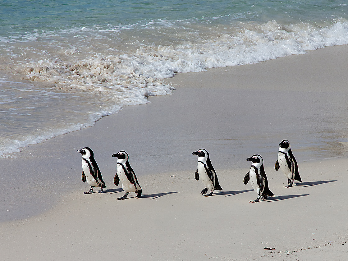 2012_05_01_IMG_2436_CapePointTour_DxOK