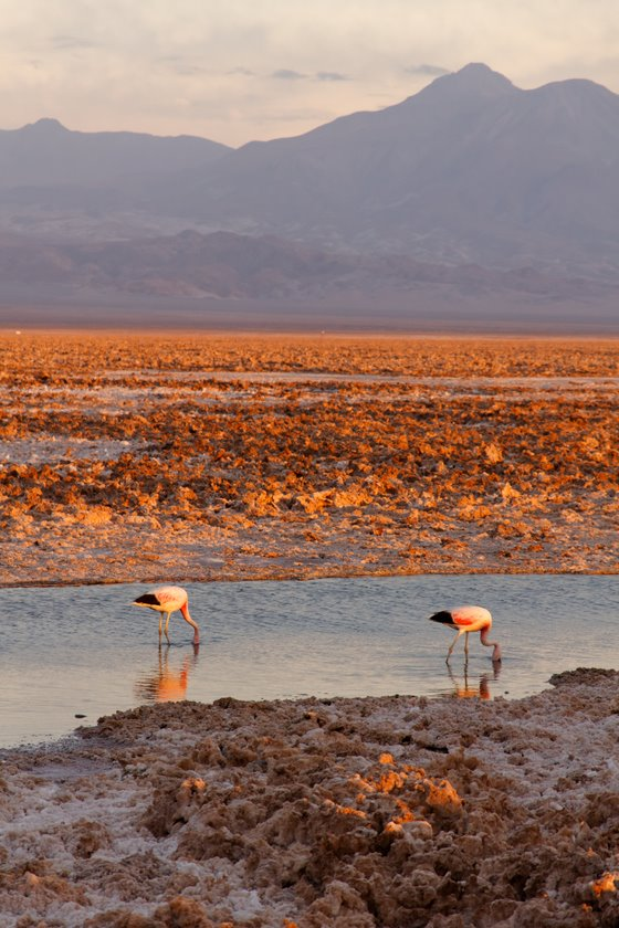2011_01_25_IMG_0431_Chile_AtacamaDesert_DxO
