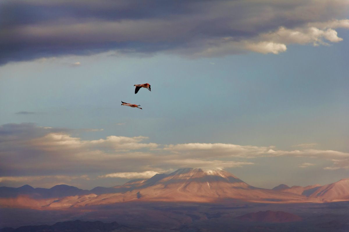 2011_01_25_IMG_0424_Chile_AtacamaDesert_DxO_Tz