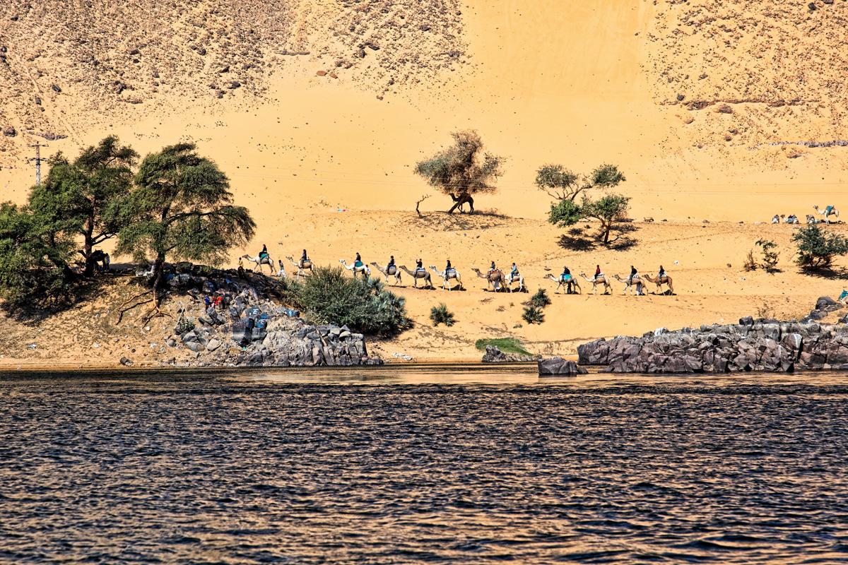 A camel line near Aswan